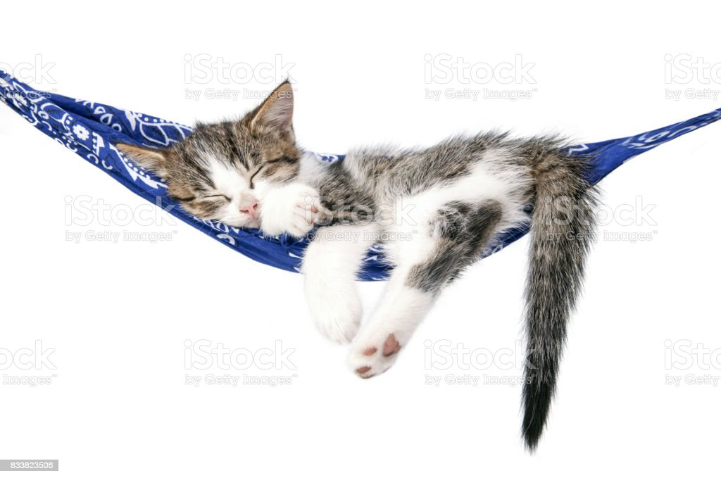 Little kitten sleeps on a hammock. Small cat sleeps sweetly as a small bed. Sleeping cat on a white background. – zdjęcie