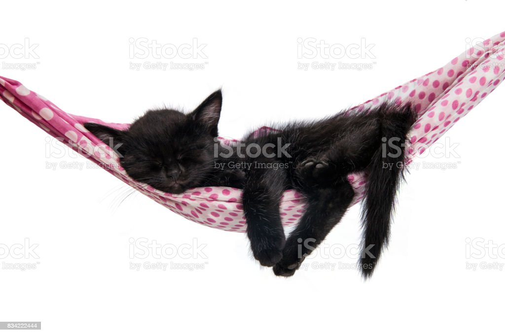 Little kitten sleeps on a hammock. Small cat sleeps sweetly as a small bed. Sleeping cat on a white background. Cats rest after eating. – zdjęcie