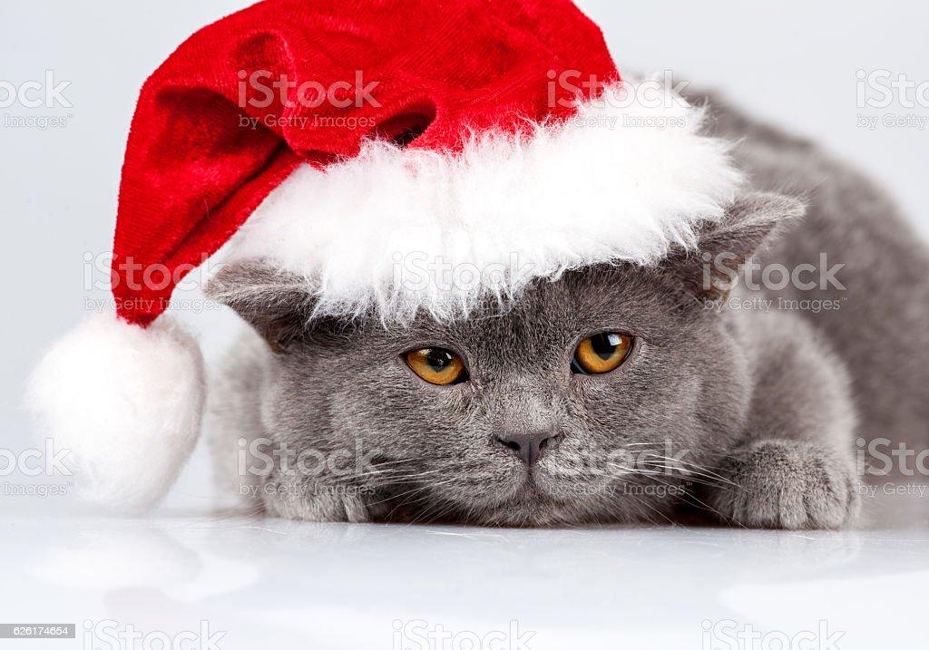 Little kitten wearing Santa hat lying on white artificial snow stock photo