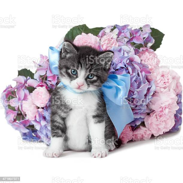 Little kitten with a bow and flowers picture id471807371?b=1&k=6&m=471807371&s=612x612&h=nolkvh9ok5po6vhmphyyt2n8gwe04bw7w 9jkciamoe=