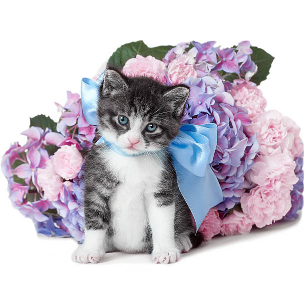 Little kitten with a bow and flowers picture id471807371?b=1&k=6&m=471807371&s=612x612&w=0&h=tetmsctmy8dlonqvmuhl4i7d3qijvmab ssjdxkrkqw=