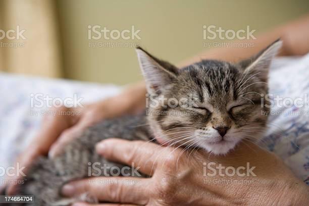 Little kitten with an elderly senior woman picture id174664704?b=1&k=6&m=174664704&s=612x612&h=2dugv3wg7e qc5ha1d1 jxzil9fvw777qfgsjxzserm=