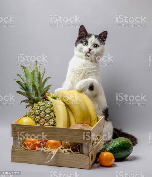 Little kitten with black and white fur and green eyes with exotic picture id1156277216?b=1&k=6&m=1156277216&s=612x612&h=84tq6zrv8pbqjrjpcct6mlomyhergg 5ubw6tpal k0=