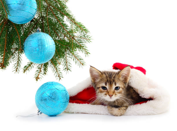Little kitten with christmas decorations picture id1069305856?b=1&k=6&m=1069305856&s=612x612&w=0&h=7dhkh iypn5rvwl qmkuhudbgxo3j0lgx2jebstqoli=