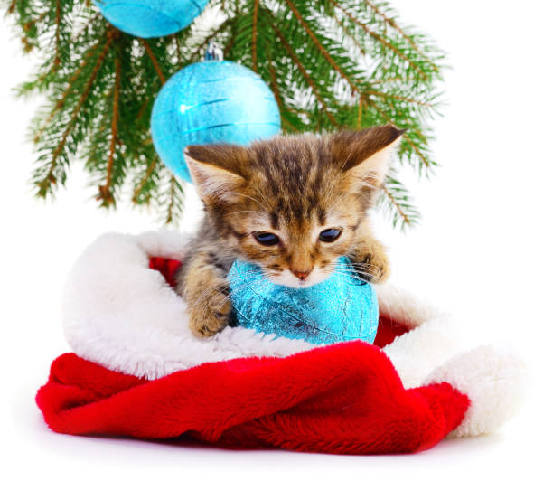 Little kitten with christmas decorations picture id1070275912?b=1&k=6&m=1070275912&s=612x612&w=0&h=rnuz56enbcmxgcykv4oyxe4wpvqqeamdsg9kd9 5ye8=