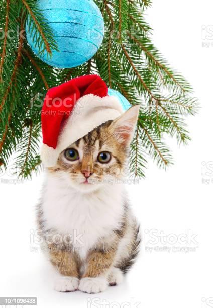 Little kitten with christmas decorations picture id1071096438?b=1&k=6&m=1071096438&s=612x612&h=g6 ycqardqcxntabgezbjqdrt ubmvx4sd7ourkslfm=