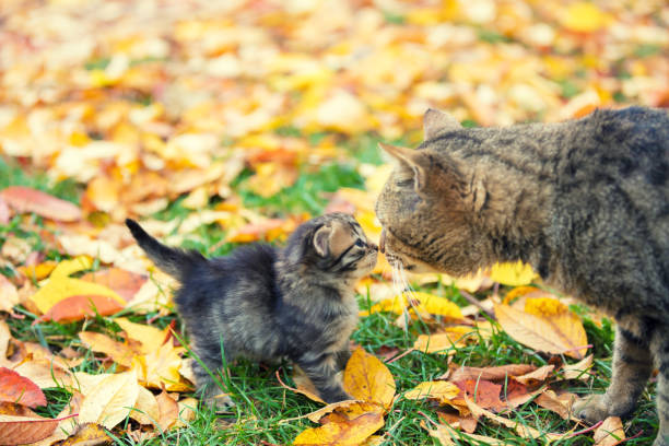 Little kitten with mother cat in a garden on fallen leaves in autumn - foto stock