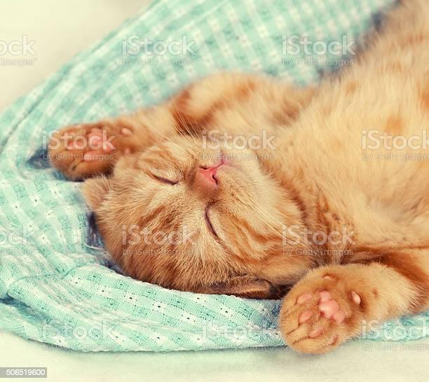 Little kitten with paws up sleeping on the back picture id506519600?b=1&k=6&m=506519600&s=612x612&h=waffk38chmqyqs3hfjunccizffz5c h0kga6ywfyghk=