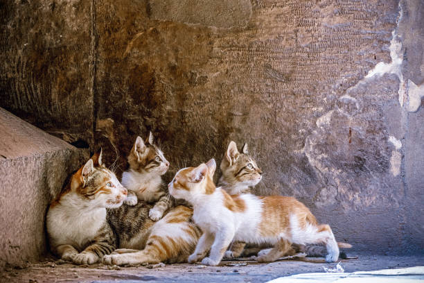 Little kittens are played at the mom's on granite stairs in the mosque stock photo