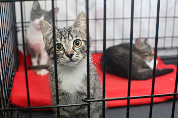 Little kittens in a cage of a shelter Little kittens in a cage of a shelter for homeless animals sheltering stock pictures, royalty-free photos & images