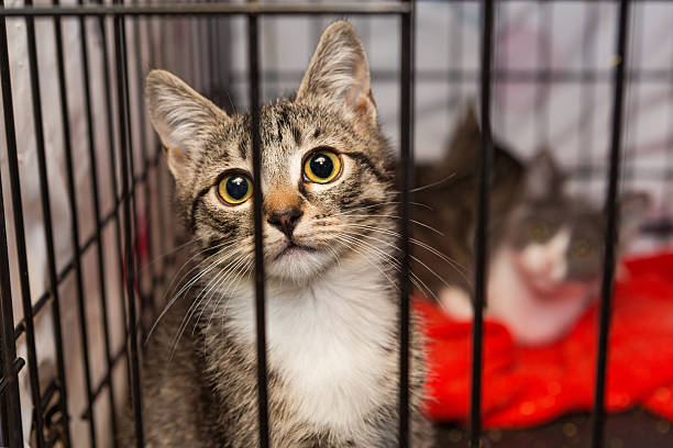 little kittens in a cage of a shelter - obdachlosen unterkunft stock-fotos und bilder