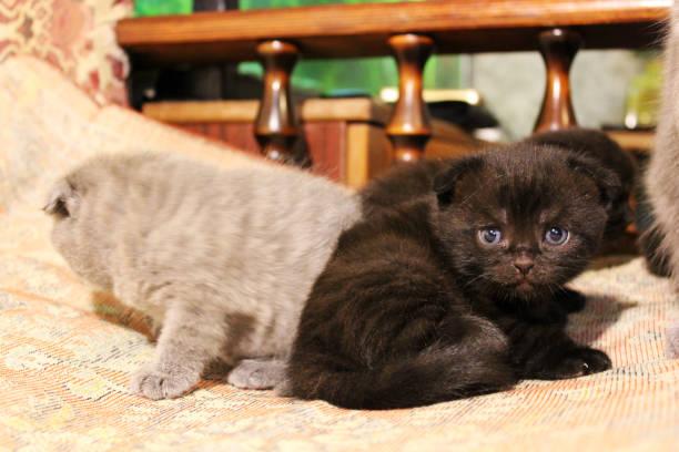 Little kittens picture id1169315167?b=1&k=6&m=1169315167&s=612x612&w=0&h=h6f46r70nbwk3zuws32rns icnqmzpbuktwug23qfji=