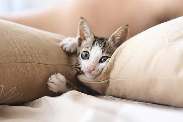 Little kitty picture id182354579?b=1&k=6&m=182354579&s=612x612&w=0&h=pnhg08a0iwwd6c8bul4u6eopxclw4iskekkfyb6ysee=