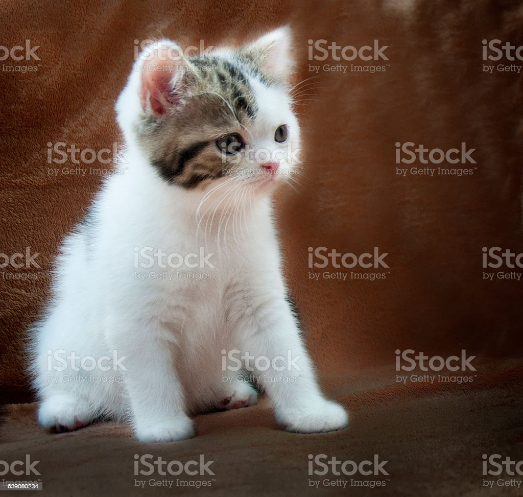 Little Kitty - foto de stock
