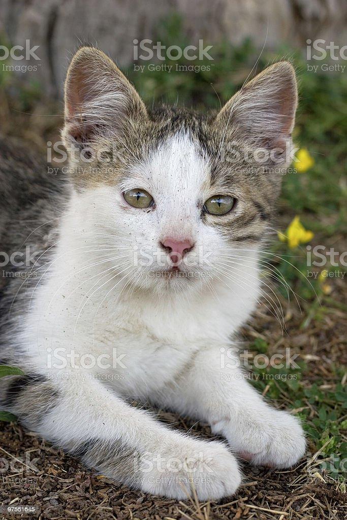 Petite kitty photo libre de droits