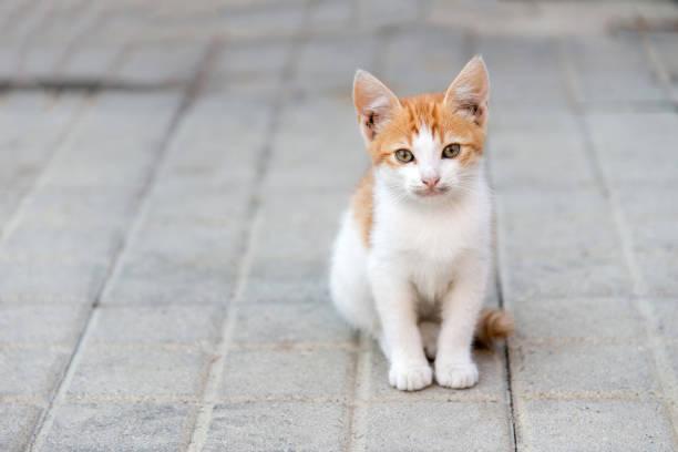 kleine Katze sitzt auf einem Bürgersteig Blick in die Zukunft – Foto