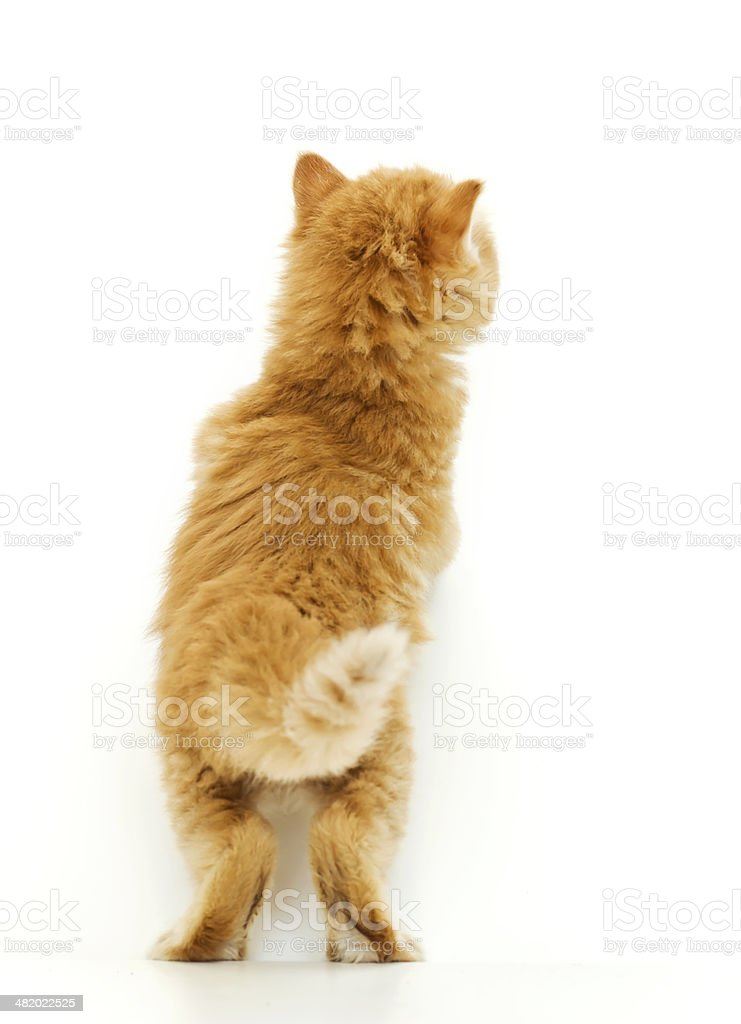 Little kitty standing in back stock photo