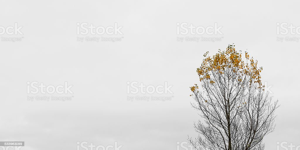 Little leaves on lonely tree in autumn stock photo