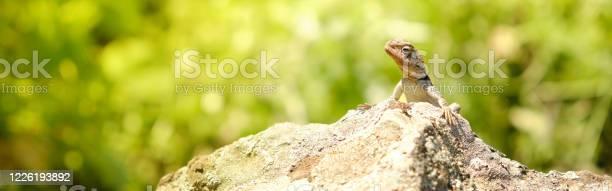 Little lizard sitting on the rock under the sun web header picture id1226193892?b=1&k=6&m=1226193892&s=612x612&h= sd4oznsi5ckriubagoa5i0jyrj8eqx1rfc0lwdhd3o=