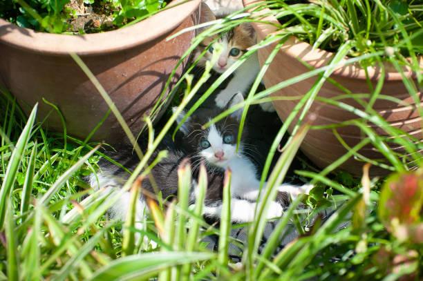 Little meow in the garden picture id1212887820?b=1&k=6&m=1212887820&s=612x612&w=0&h=6mrhwf0neuvoecgctmdo hratns7y5nipdgqrra8jg4=