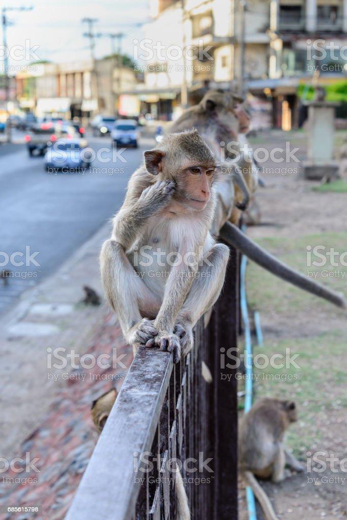 Little monkey sitting on fence in city. foto de stock royalty-free