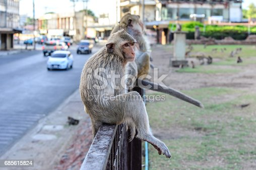 Little monkey sitting on fence in city.