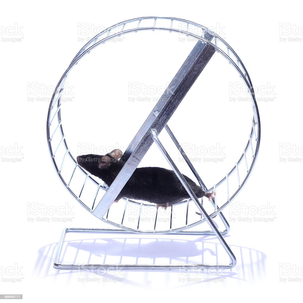 little mouse on an exercise wheel stock photo