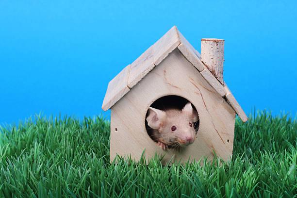 Kleine Maus – Foto