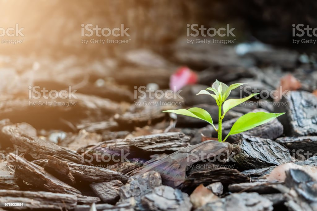 little new life tree grow on the rock, strong and development concept stock photo