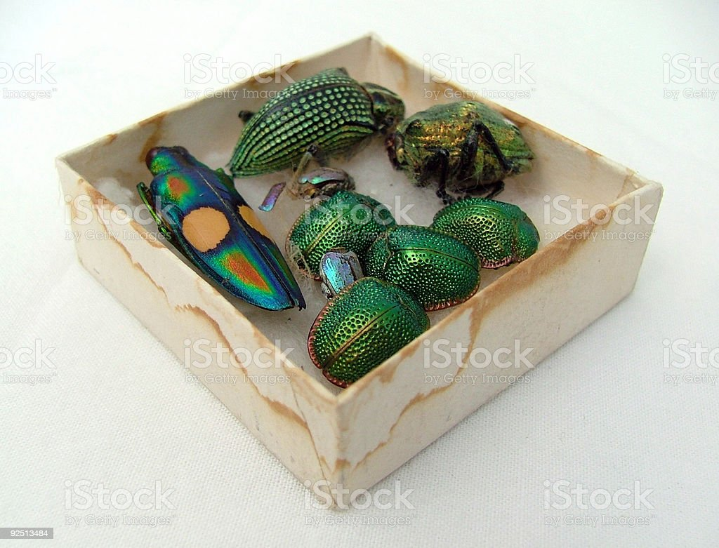 Little old box of bugs royalty-free stock photo