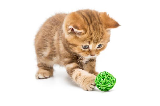 Little orange kitten and colorful balls picture id898809910?b=1&k=6&m=898809910&s=612x612&w=0&h=oj7cch78r3ymoth d0918sugud5eqmouysuq k80aio=