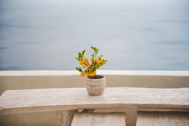 Kleiner Orangenbaum – Foto