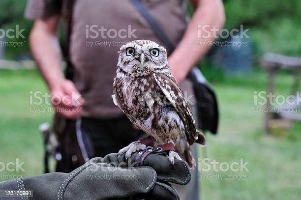 Little owl picture id123170991?b=1&k=6&m=123170991&s=612x612&h=5tugvsq5zun7rv8qqx1otfougdl2ja9izjadg6jpl9g=