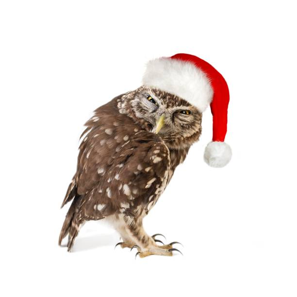Little owl standing with santa hat isolated on white background picture id1056358228?b=1&k=6&m=1056358228&s=612x612&w=0&h=xu ck2eaol2t1ibnjaxe2sy4qdpwdqt2caluz8mli8y=