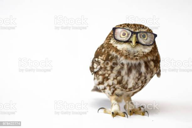 Little owl wearing glasses standing on a white background picture id978422774?b=1&k=6&m=978422774&s=612x612&h=gr2jl5tnao65t7abgc3pkfuddja7engcudga21mkr3e=