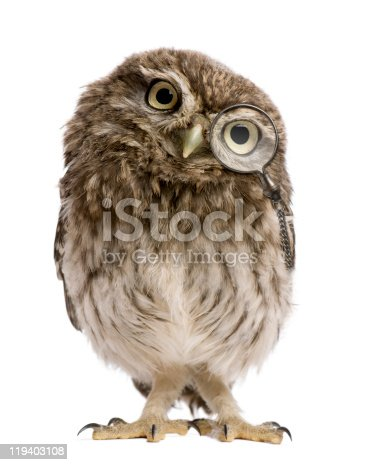 istock Little Owl wearing magnifying glass, 50 days old, standing. 119403108