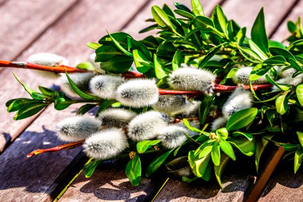 little palm busch - palmbuschen stock-fotos und bilder