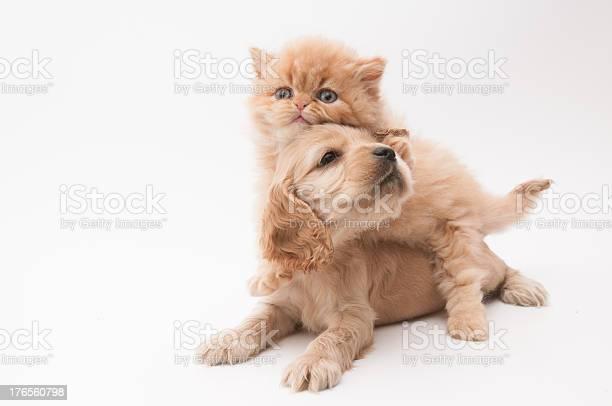 Little pets picture id176560798?b=1&k=6&m=176560798&s=612x612&h=ny253lakxu8ts3yhhzaq1fwkmuc1zddx0itwuxm9ua8=