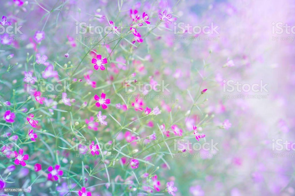 Photo de stock de Petit Champ De Fleur Rose Sur Un Ton Doux Mauve ...