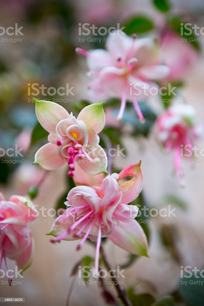 Little pink flowers background stock photo