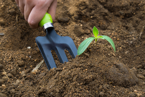 486530452 istock photo Little plant and soil on the hand shovel and spade held by one hand. Earth day. World environment day. Ozone day. 1172636140