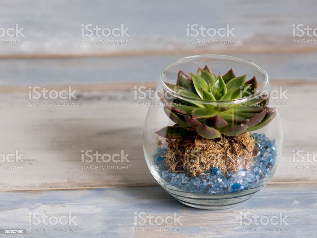 Little plant in a glass vase, on a turquoise rustic wood background, free space to the left - Photo