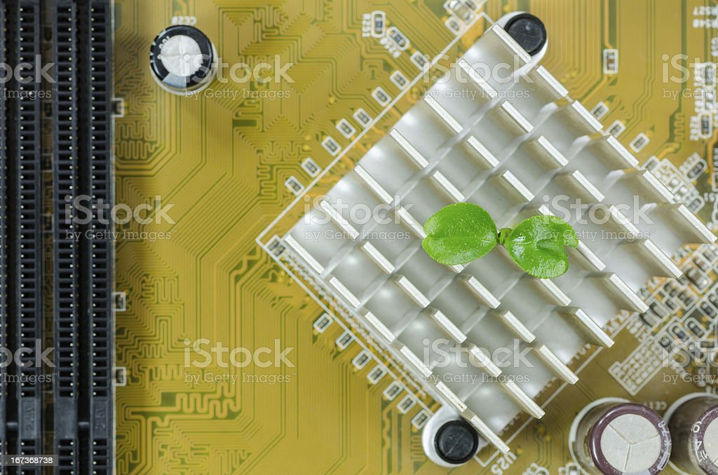 Little plant in electronic royalty-free stock photo