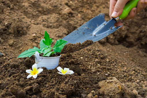 486530452 istock photo Little plant in the bucket with the hand shovel and spade held by one hand. Earth day. World environment day. Ozone day. 1172636129