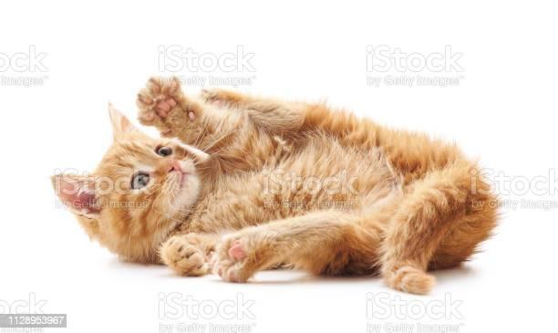Little playful cat picture id1128953967?b=1&k=6&m=1128953967&s=612x612&h=s75gjat2r9oif0z vpvjwdo4dsidt8ezn5 c nece30=