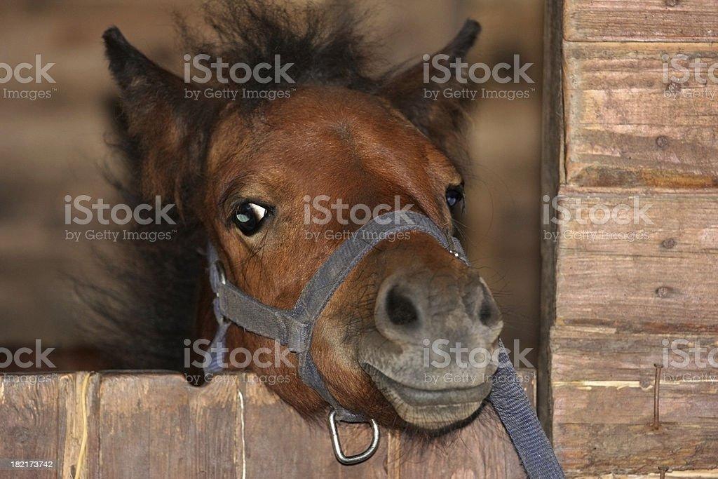 Little pony. stock photo