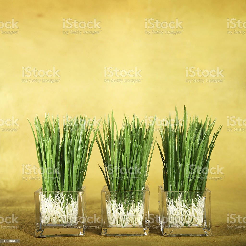 Little Pots with Grass royalty-free stock photo