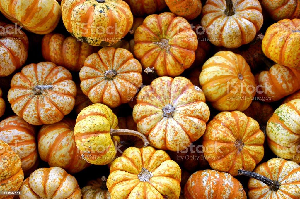 Little Pumpkins royalty-free stock photo