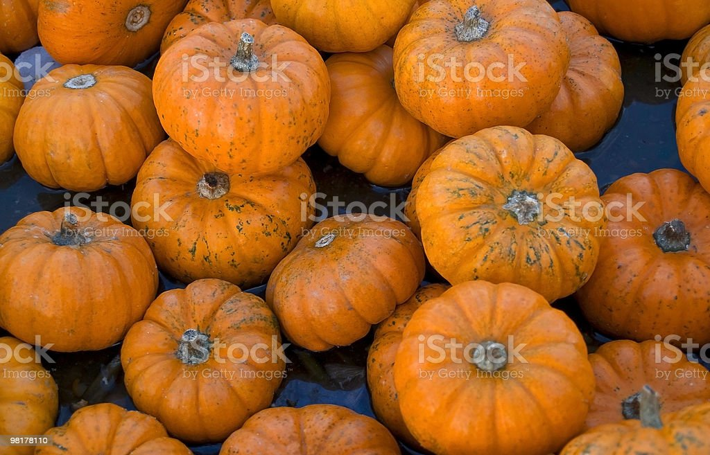 Little Pumpkins royalty-free stock photo