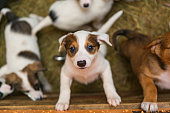 istock Little puppies in the 543600370